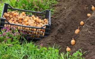 Посадка картофеля мотоблоком — обзор двух методов!